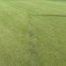 <12th Green drain to be repaired to prevent drying out every summer
